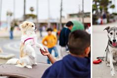 blog_dogs_1.jpg