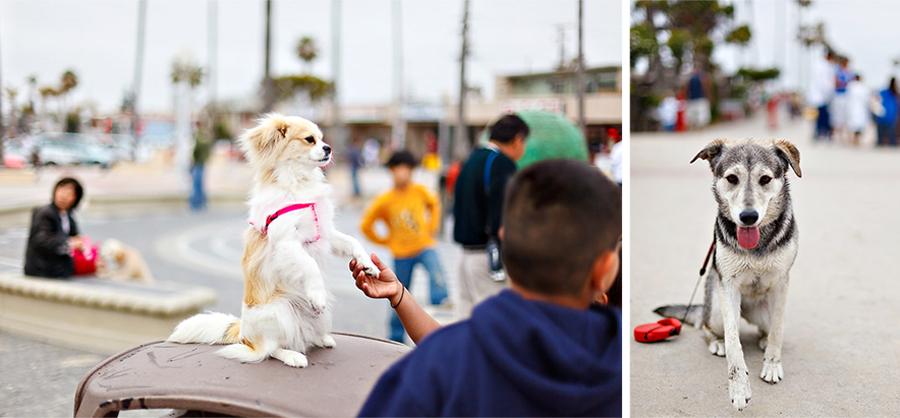 blog dogs 1.jpg