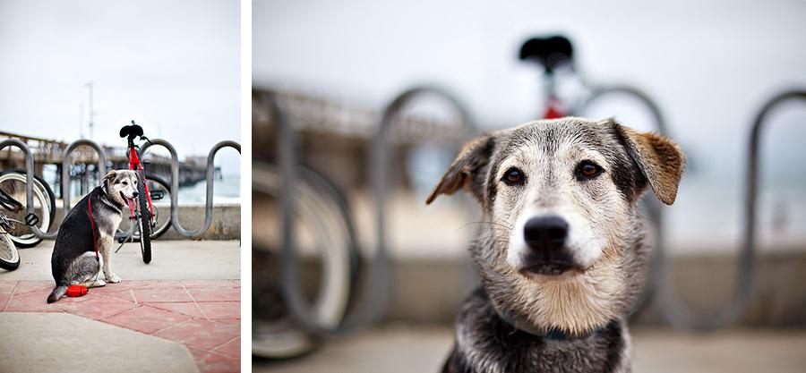 blog dogs 2.jpg