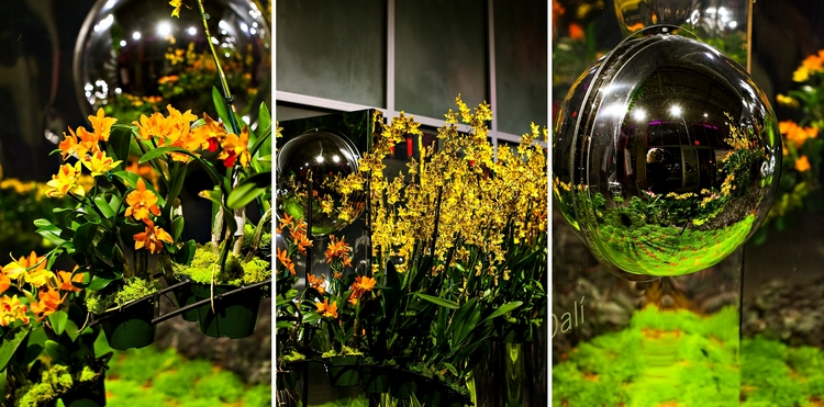 photos of orchid daze: surreal beauty at the atlanta botanical garden